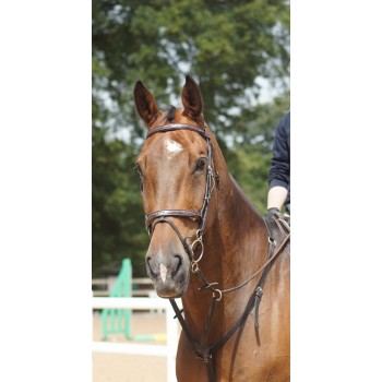 Prestige E100 Meredith High Line Bridle